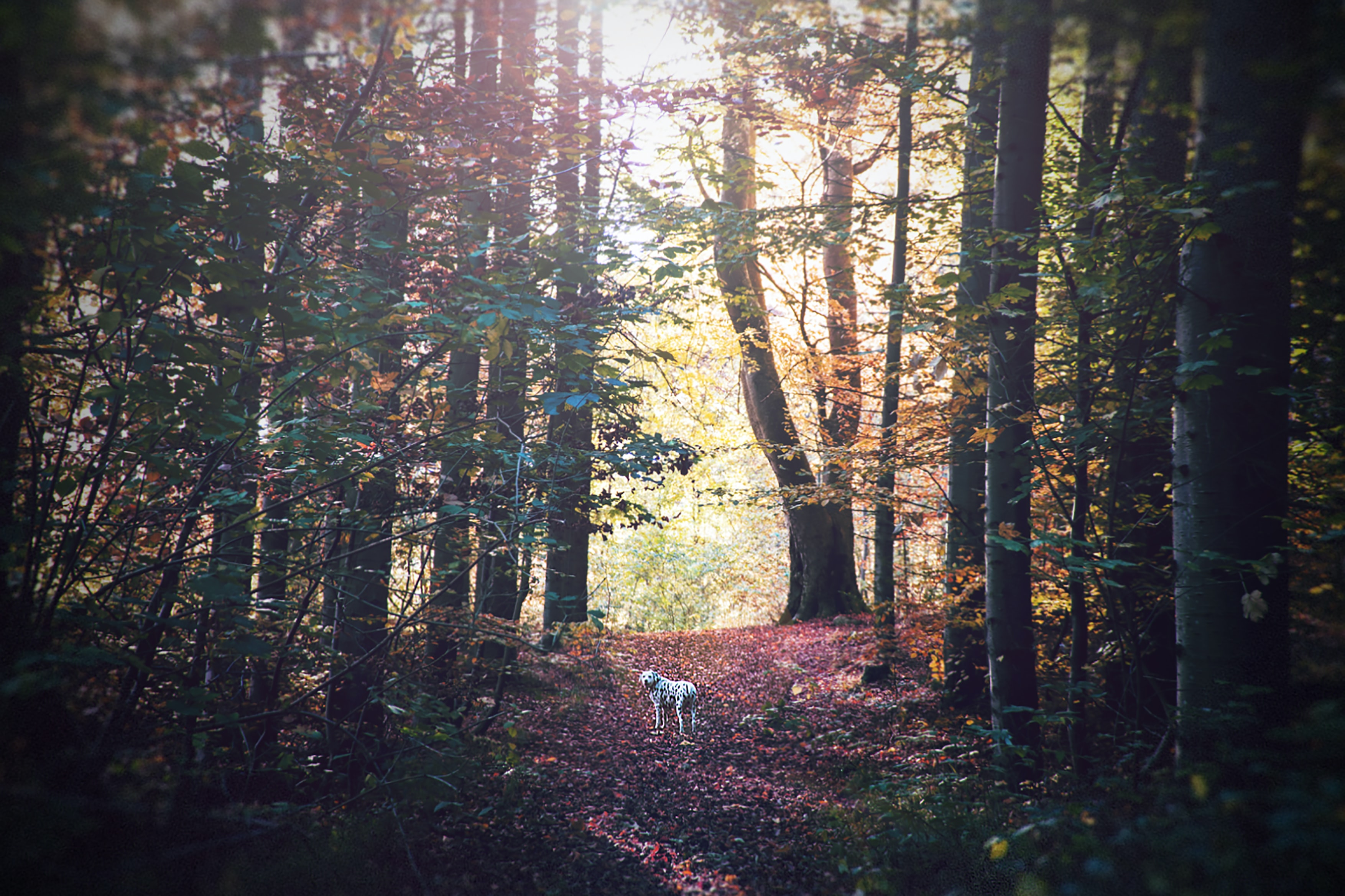 white dog on forest