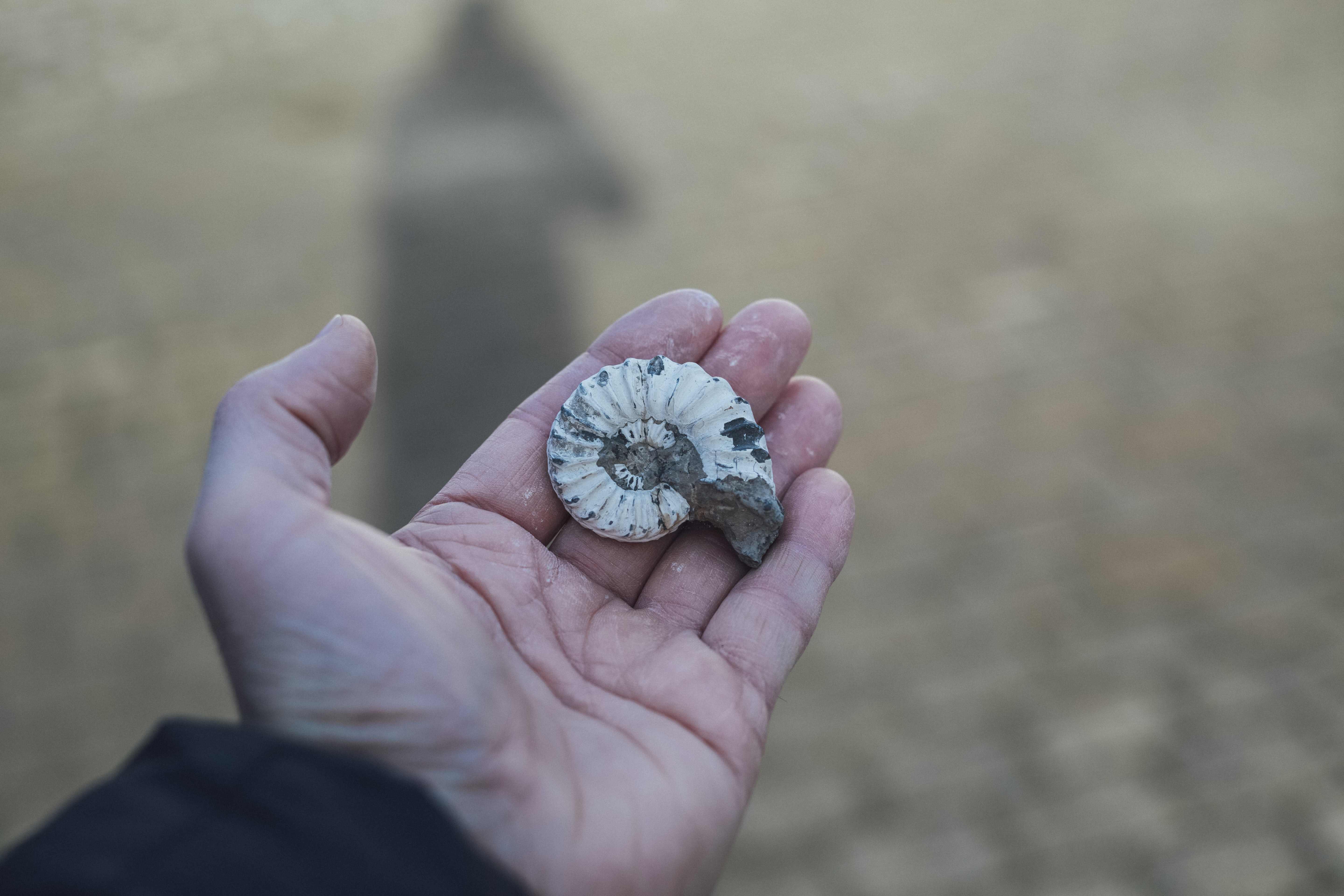 person holding gray and white shell