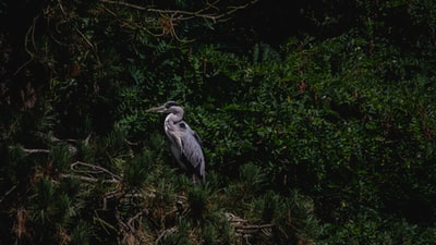 gray birds near trees