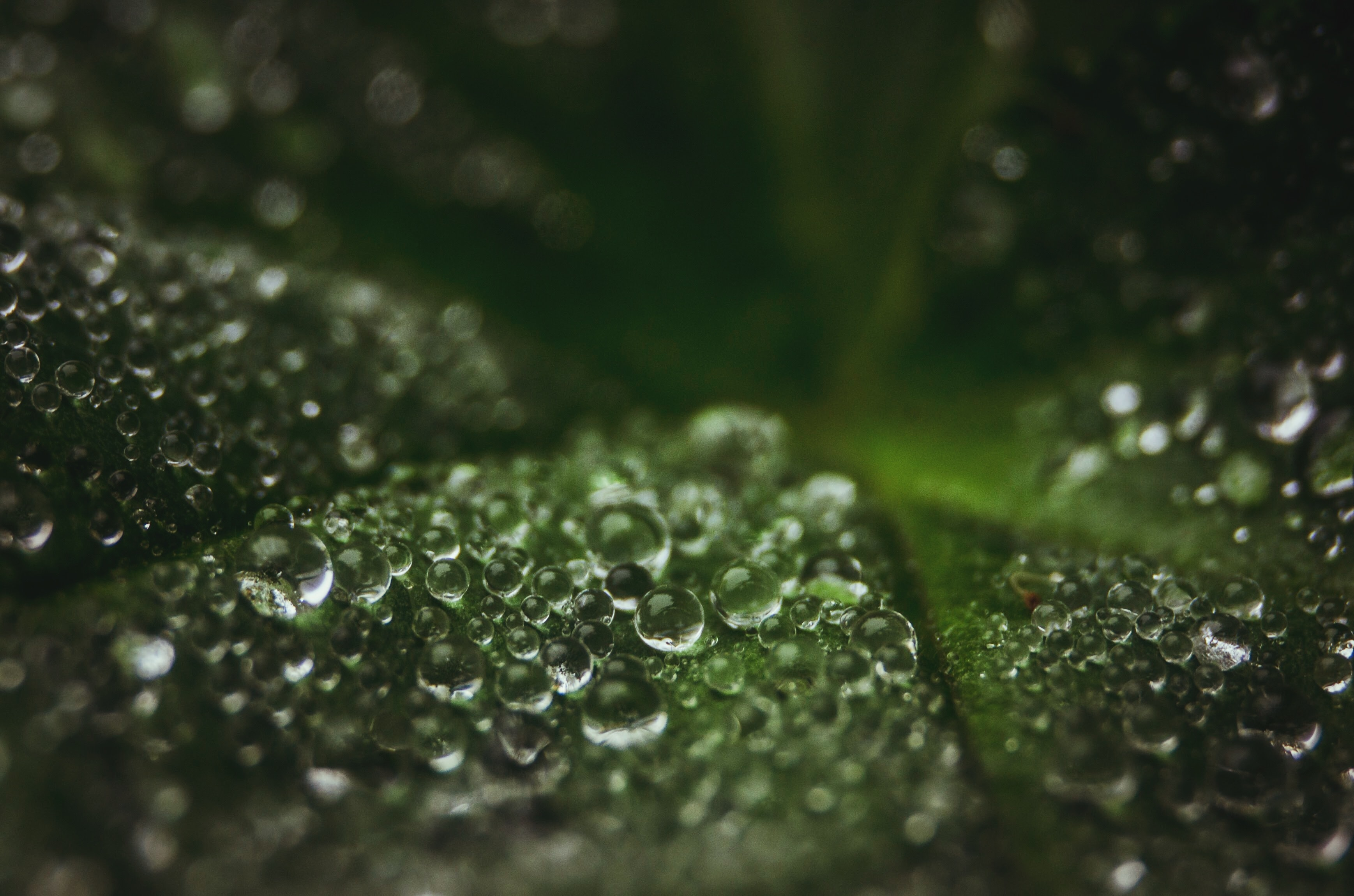 macrophotograph of water dew on green leaf