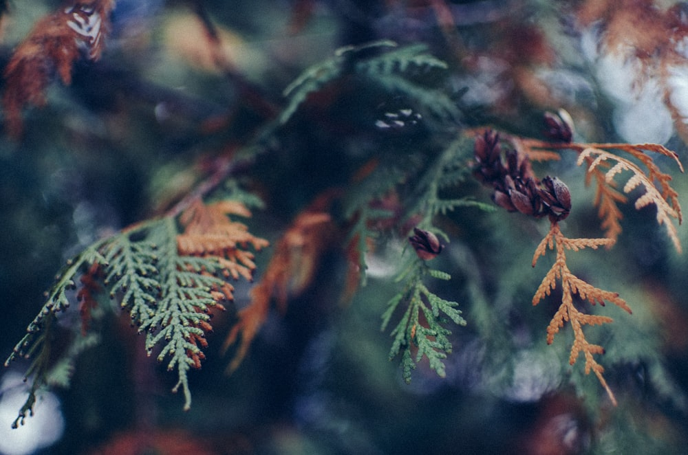 selective focus photography green and brown leaf plants