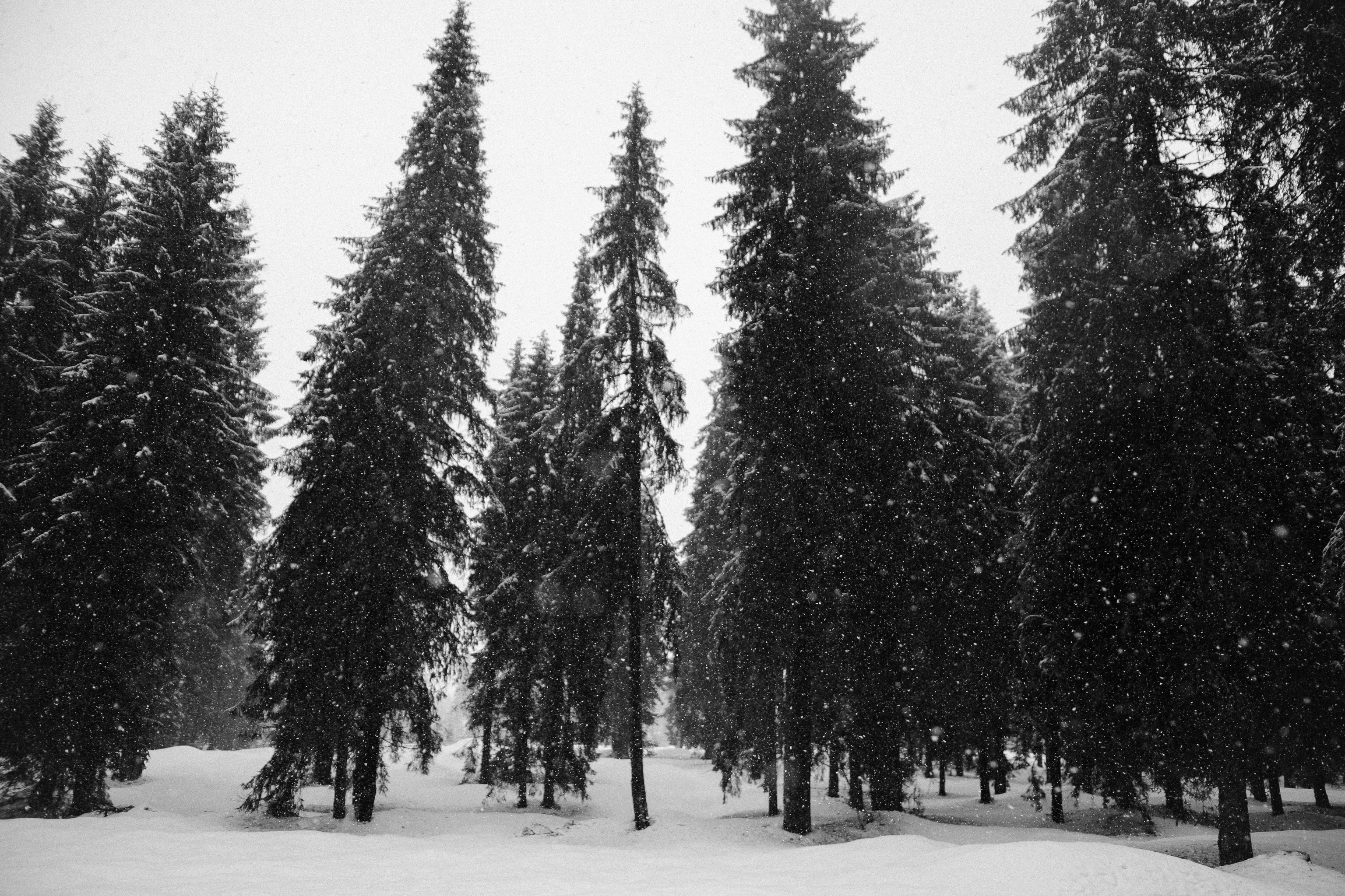 forest covered by snow