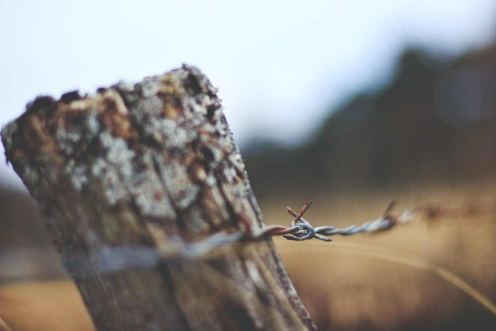 selective focus photo of barbwire