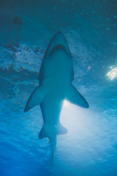 photography of shark