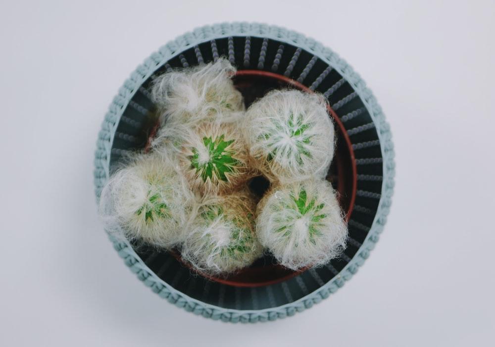 green leaves on white wicker bowl