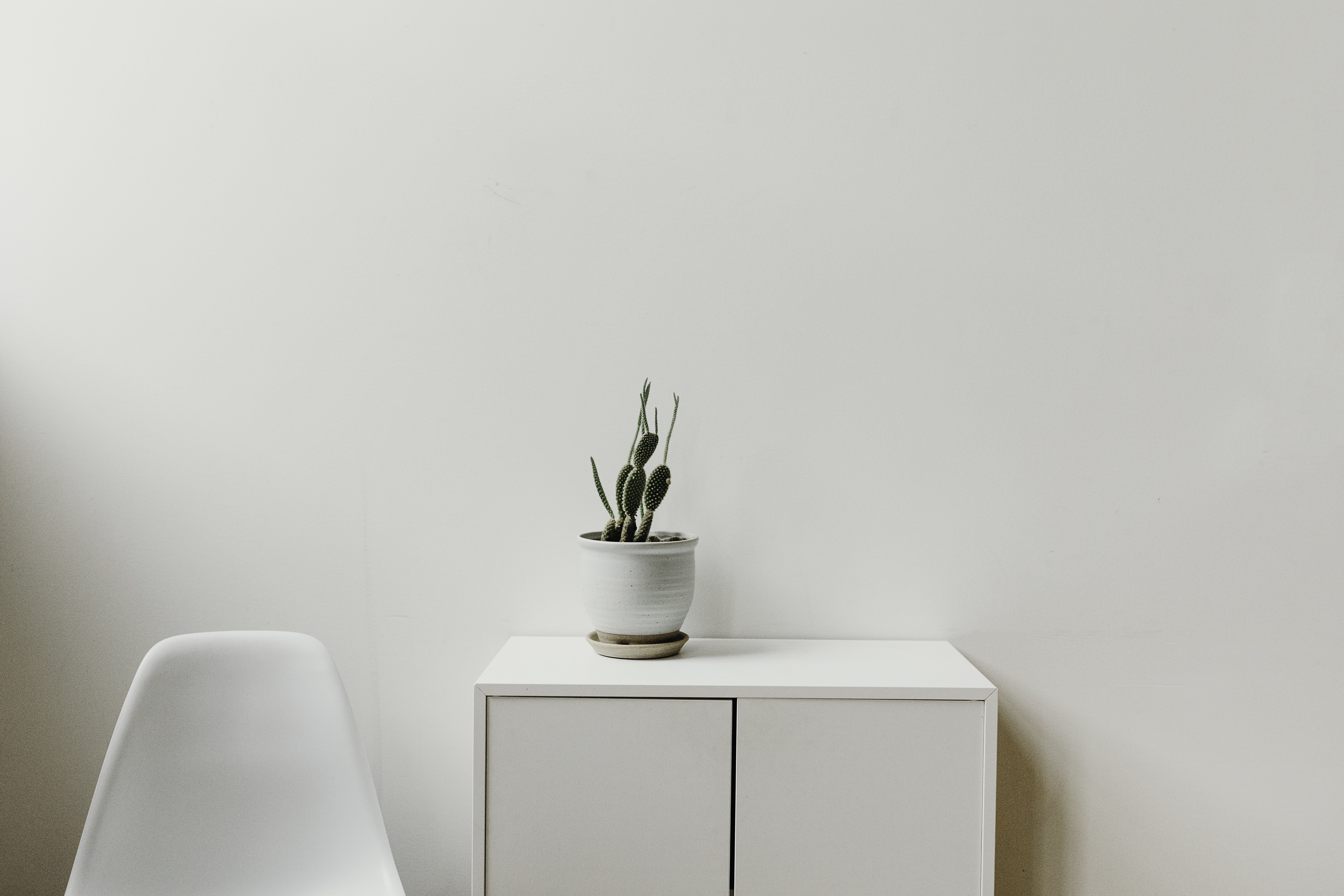 green plant on white cabinet