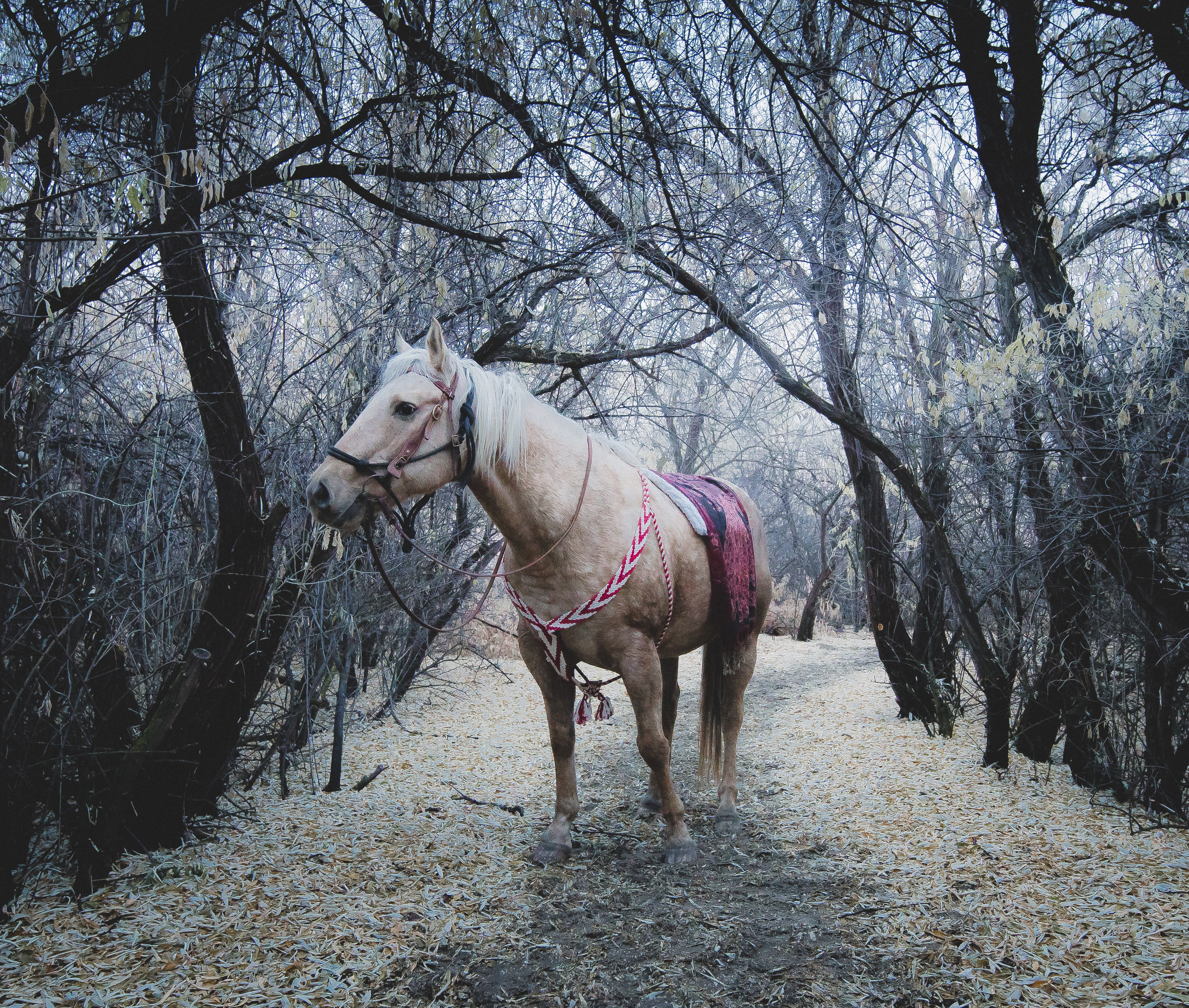 white horse standing between trees during daytime