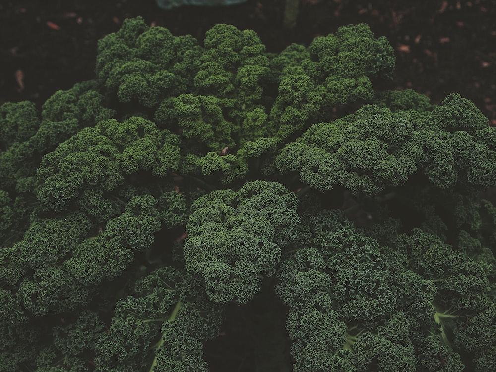 green tress