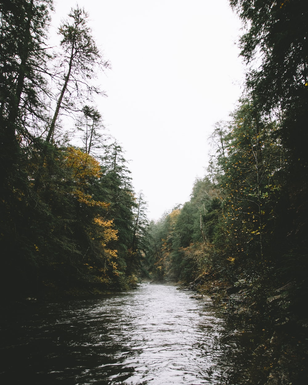 body of water and forest photography