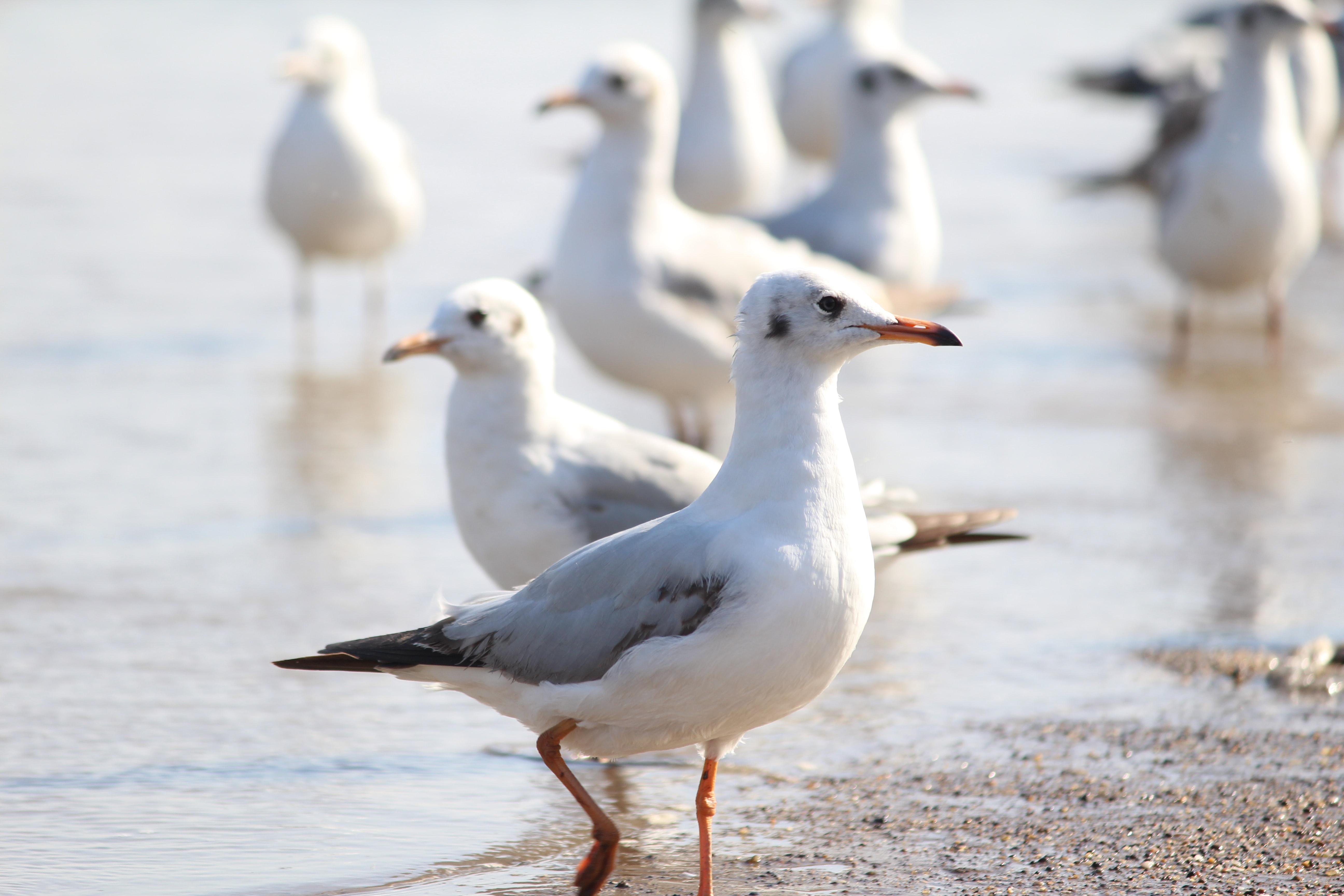 flock of white seagulls on body of water