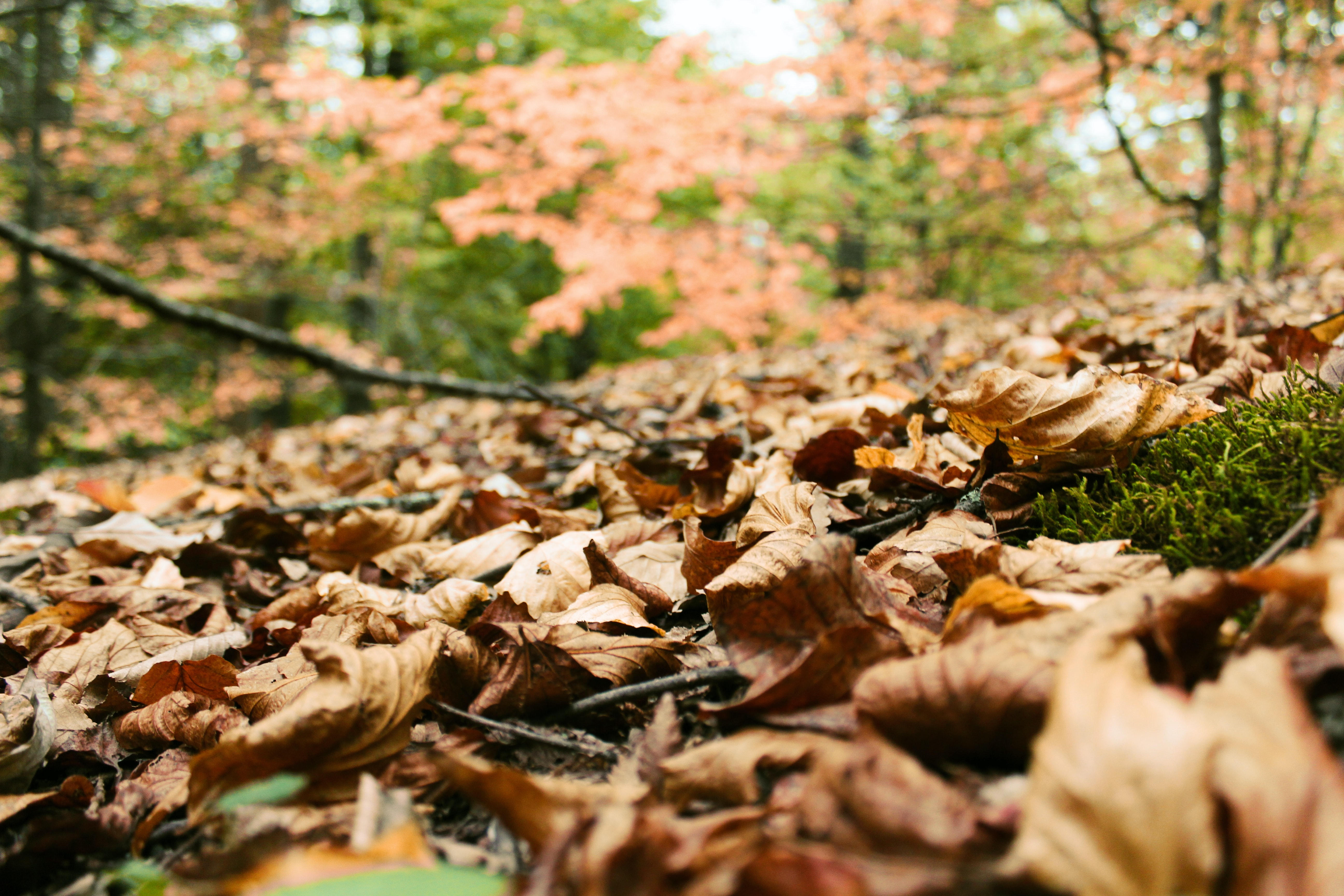focused photo of withered leaves
