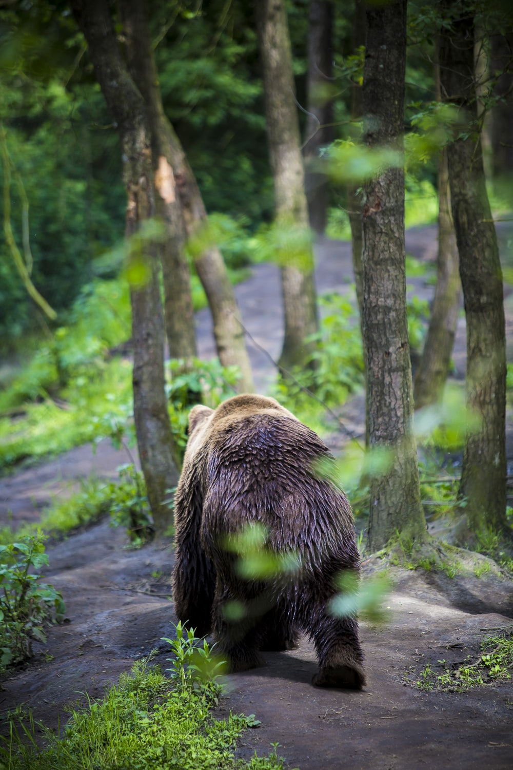 grizzly bear walking in the forest at daytime