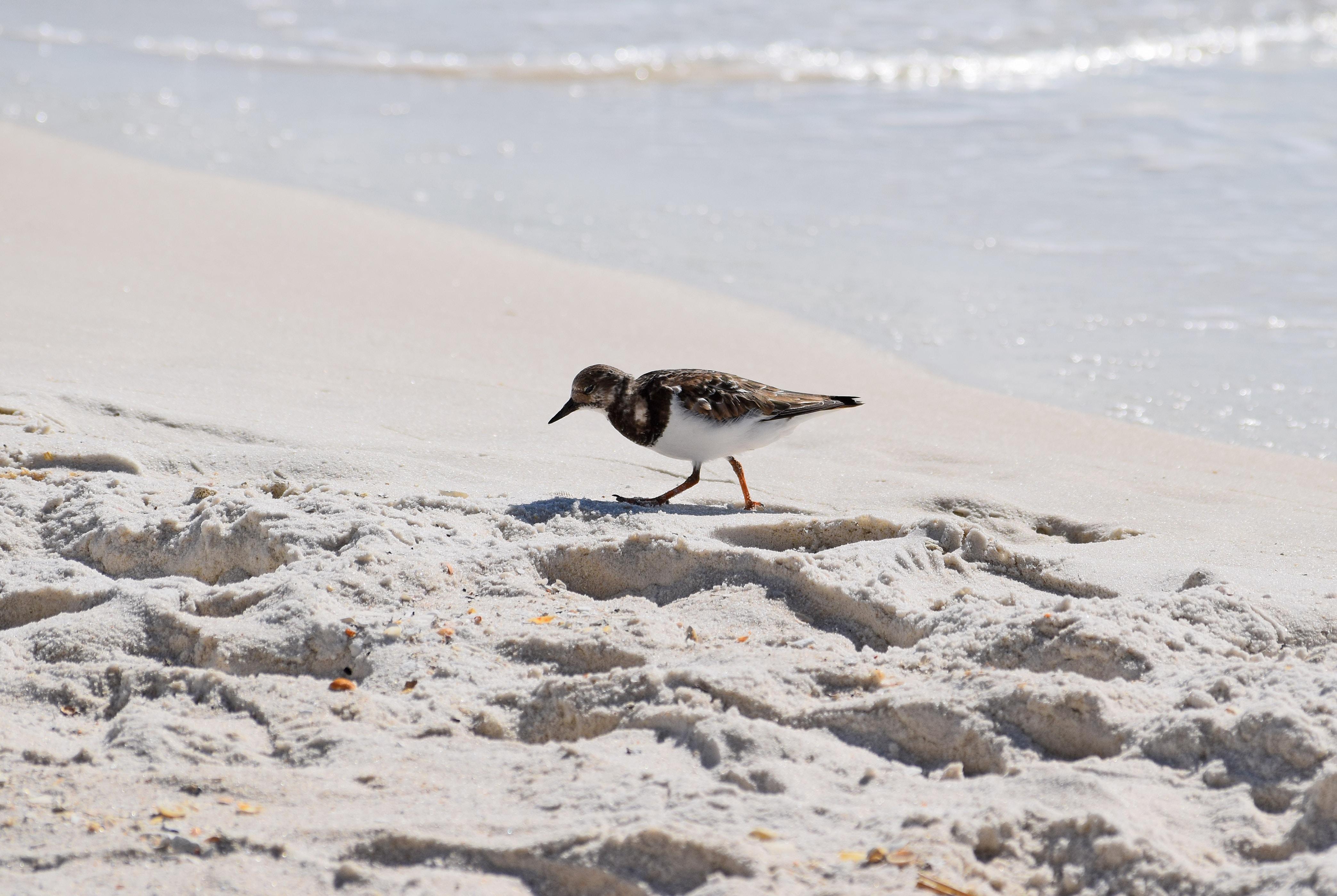 brown bird on shoreline