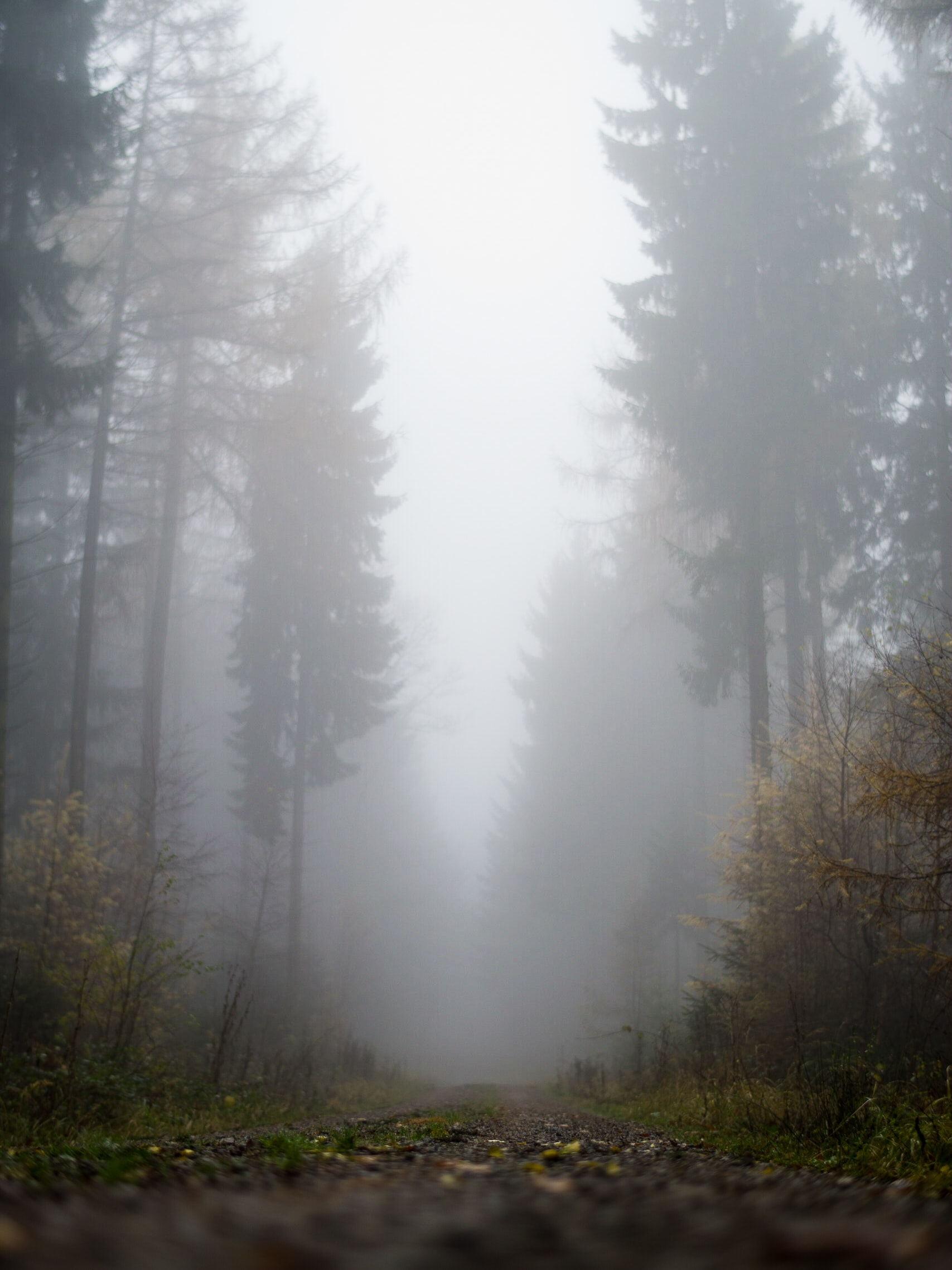 forest is covered with fog during daytime