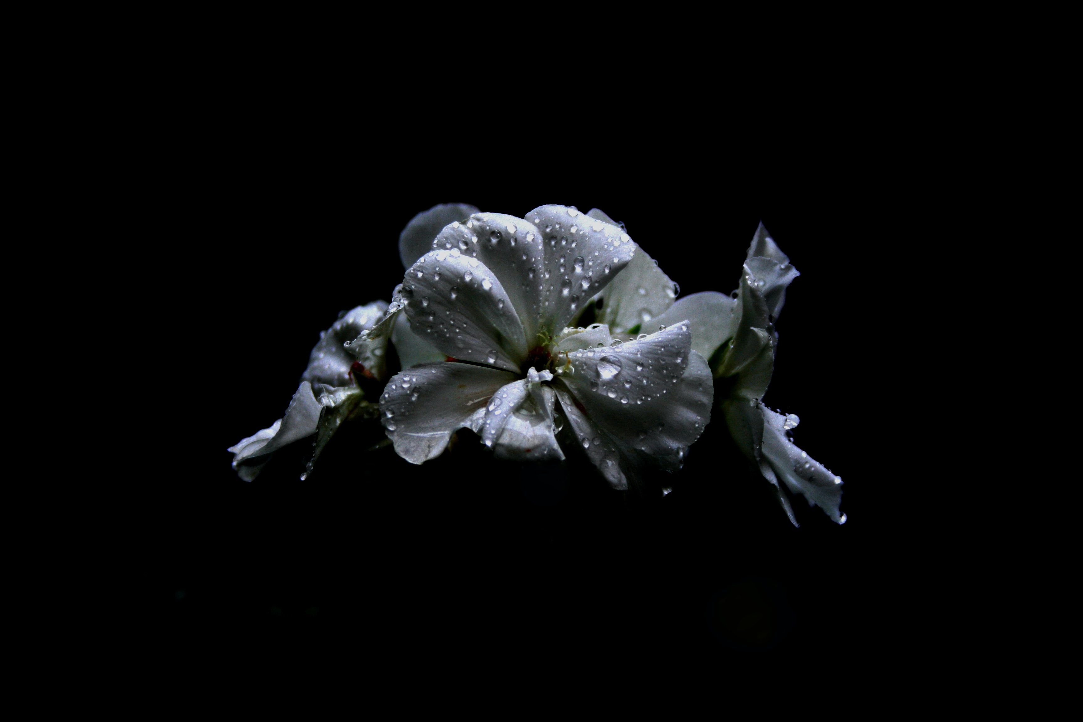 macro photography of petaled flower with water dew
