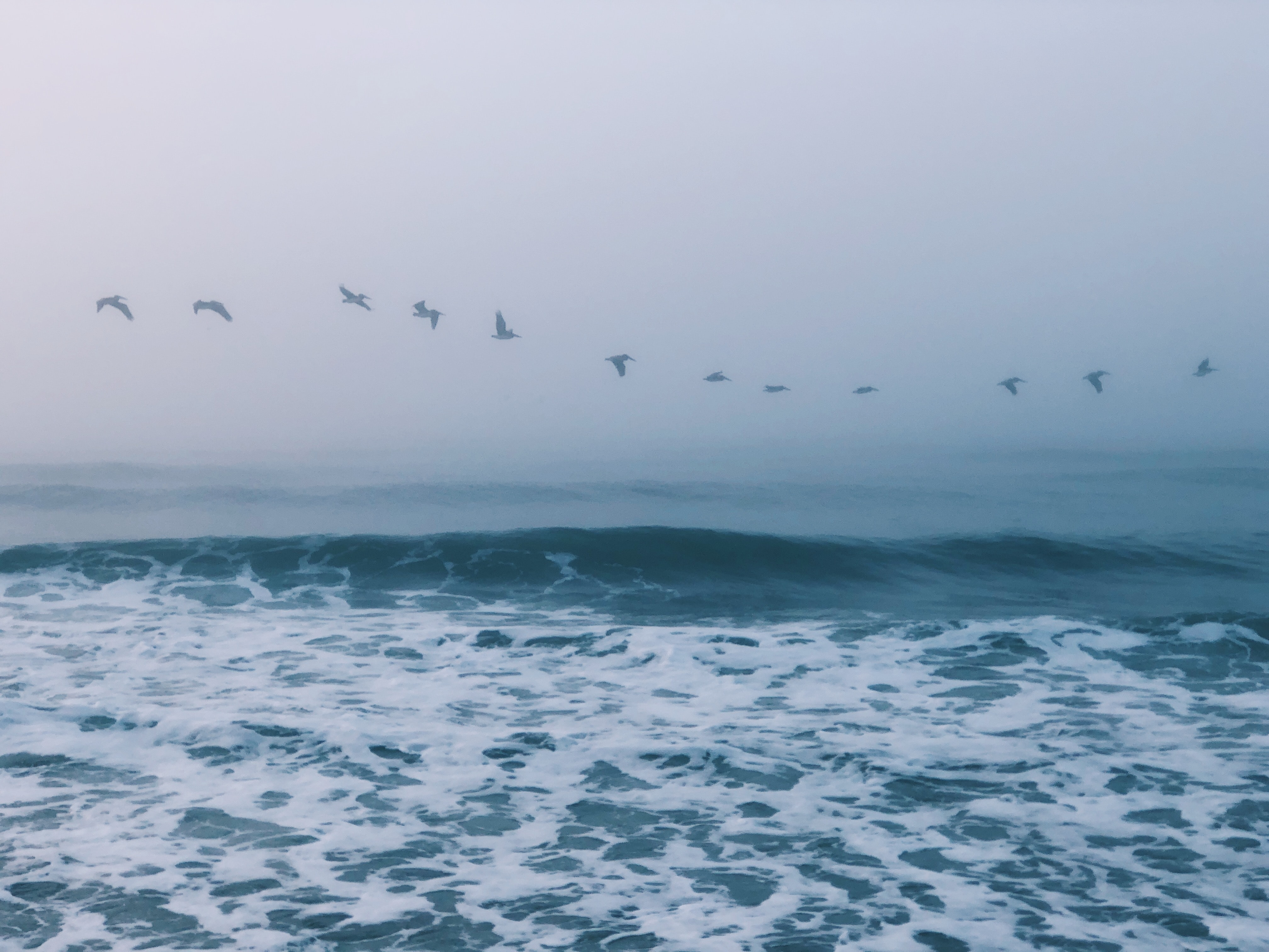 flock of birds above ocean at daytime