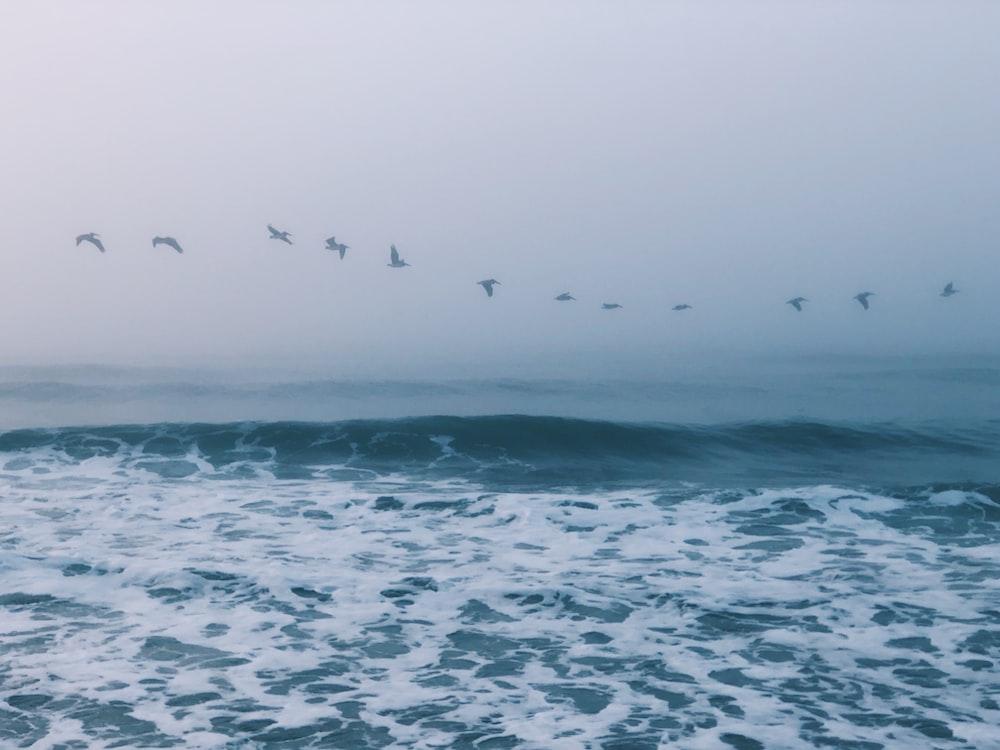 flock of birds above ocean at daytime
