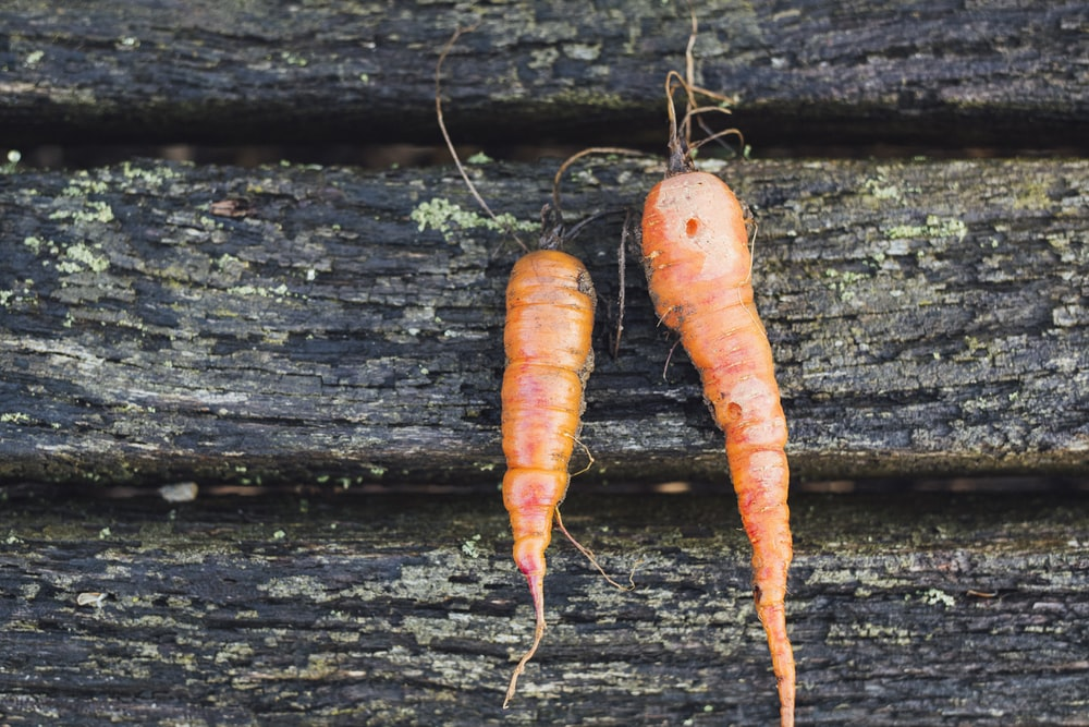 two red carrots