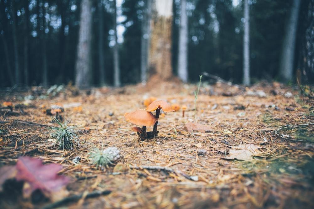 selective focus photography of brown mushroom