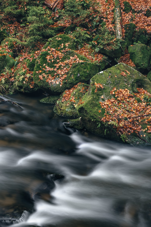 landscape shot of river