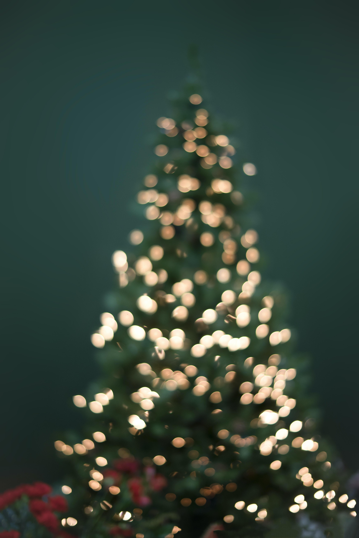 boke photography of christmas tree and string lights