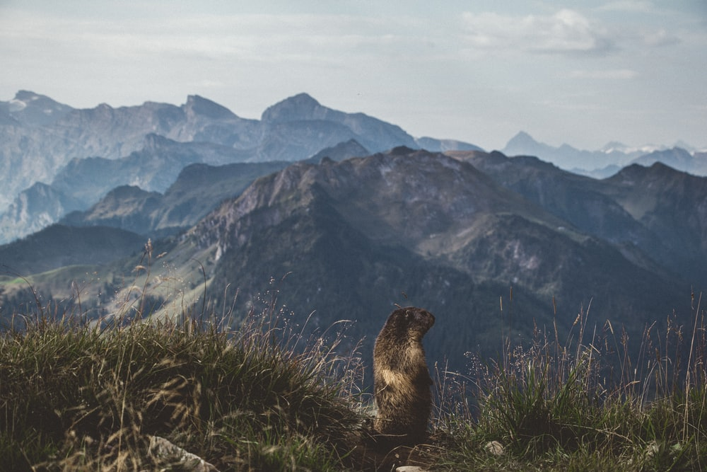 brown animal on green hill overviewing mountain range at daytime