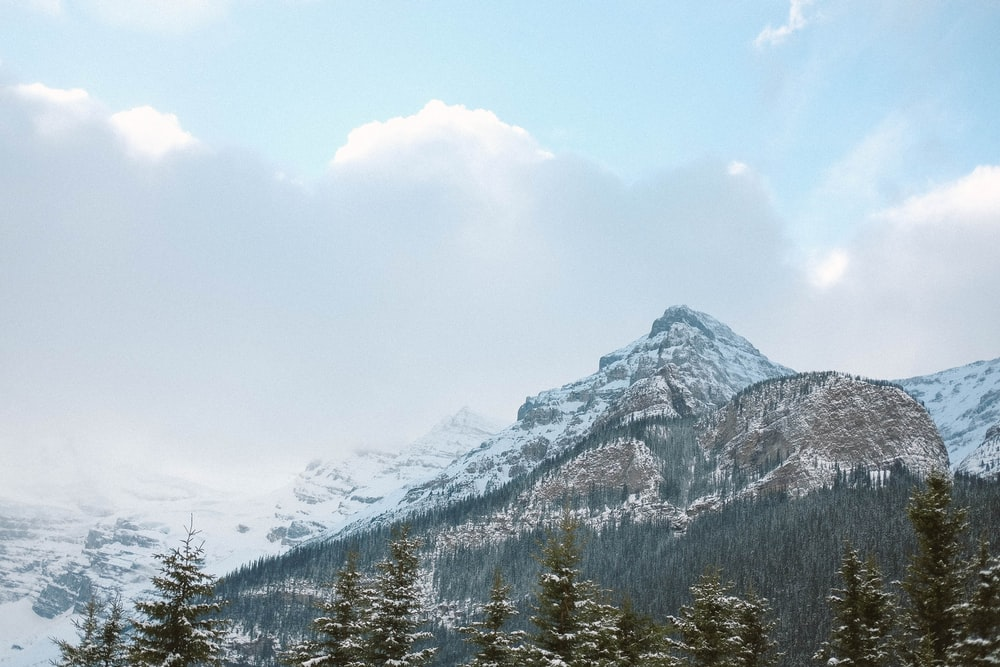 mountain surrounded with pine trees