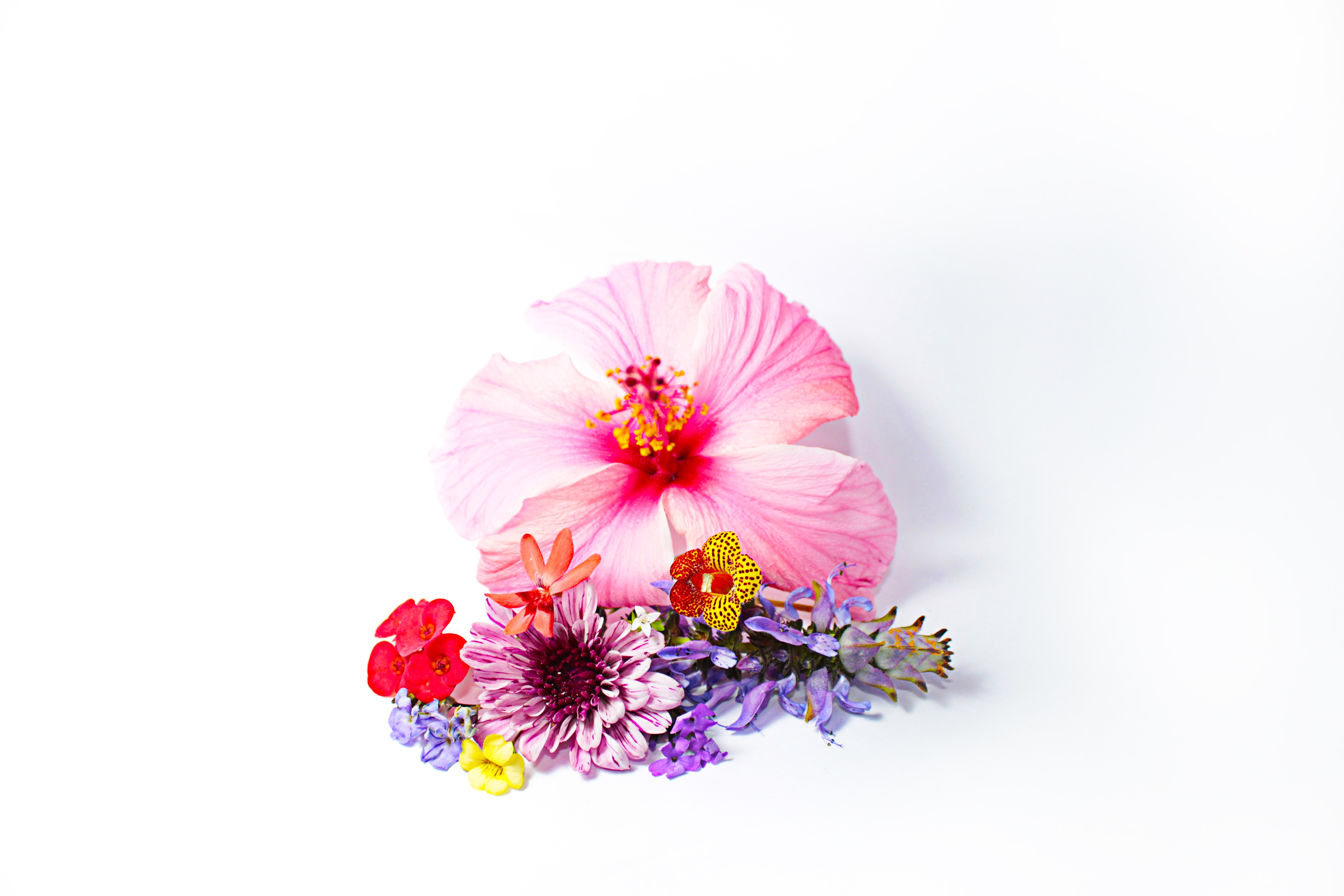 pink and purple flowers on white surface