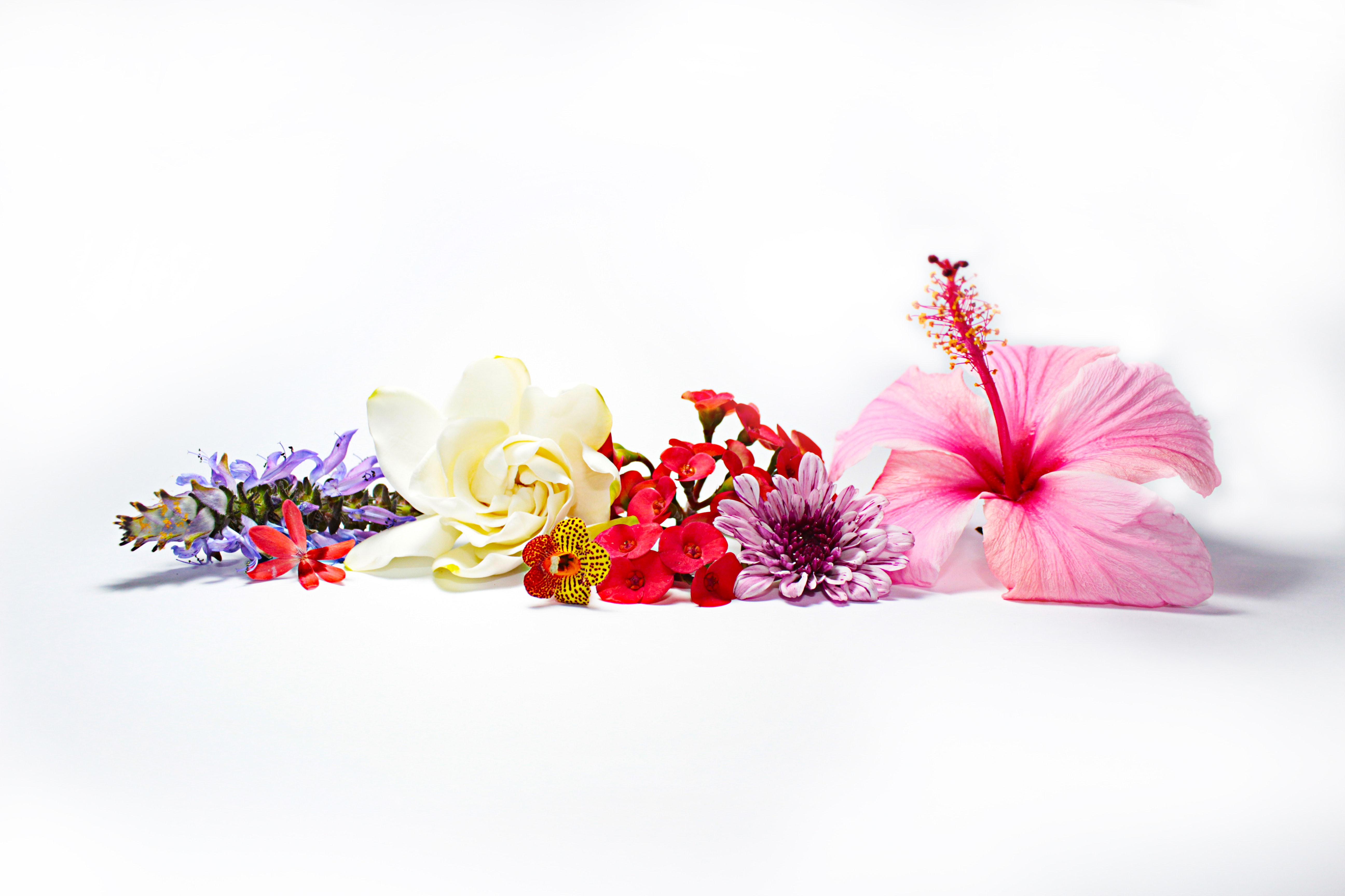 assorted-type of flowers in white surface