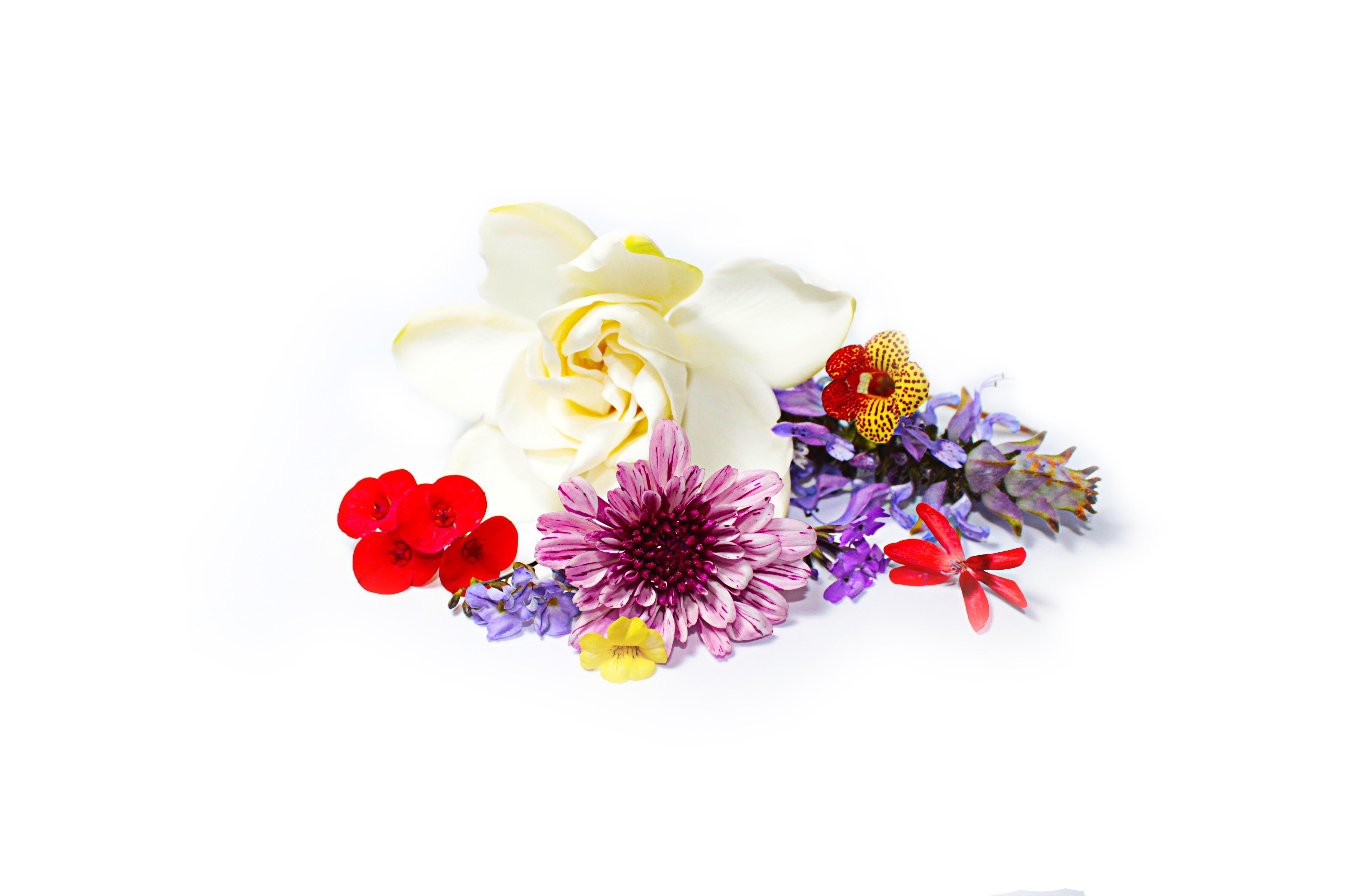 assorted-color flowers digital wallpaper