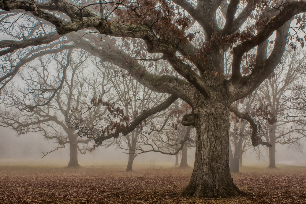 selective focus photography of old tree