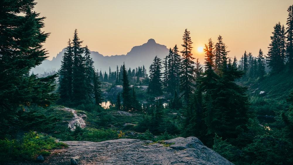 pine trees field near mountain under sunset