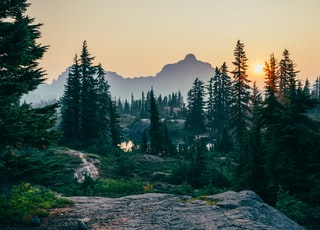 pine trees field near mountain under sunset