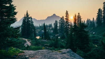 pine trees field near mountain under sunset forest teams background