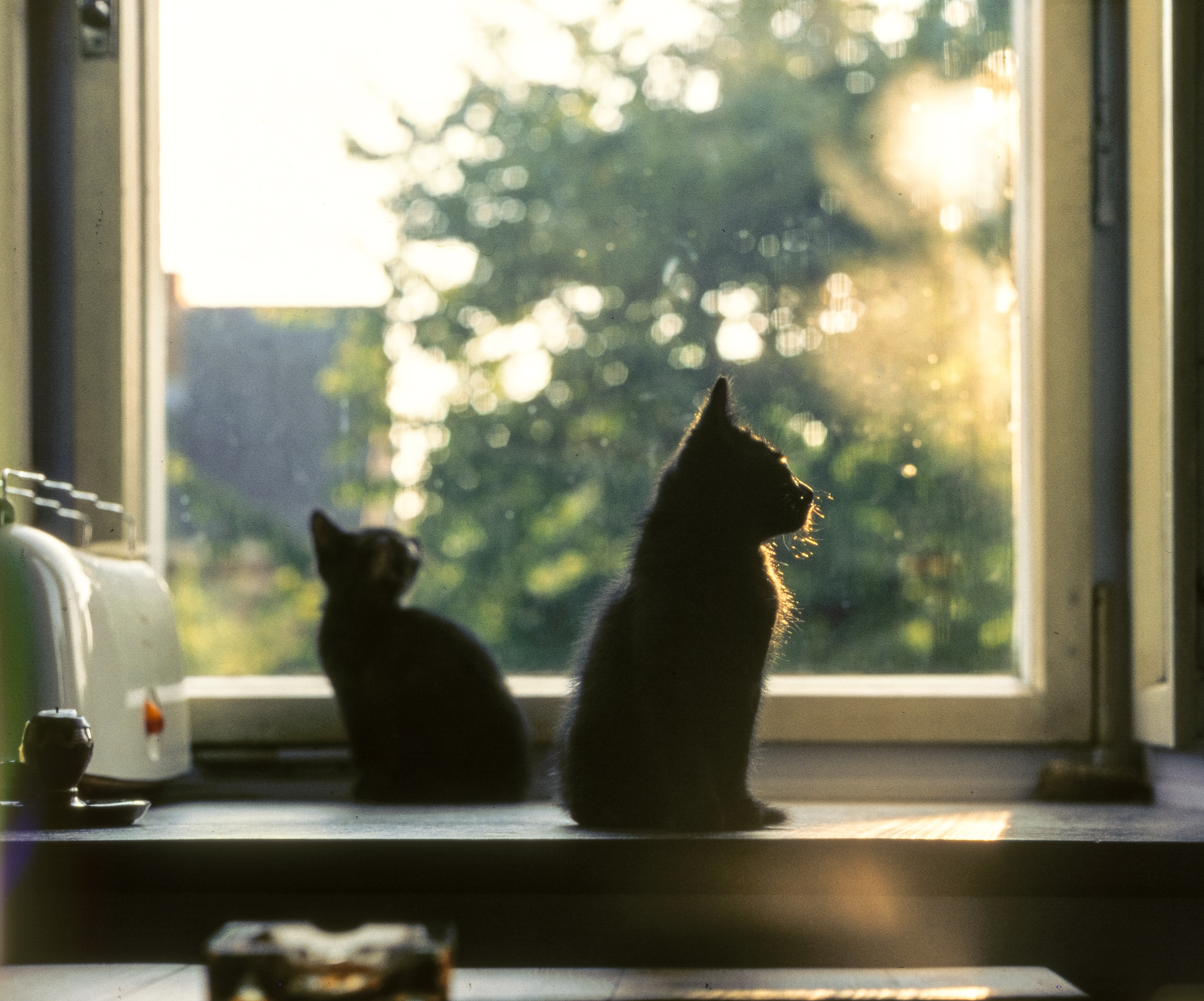 two cats on window