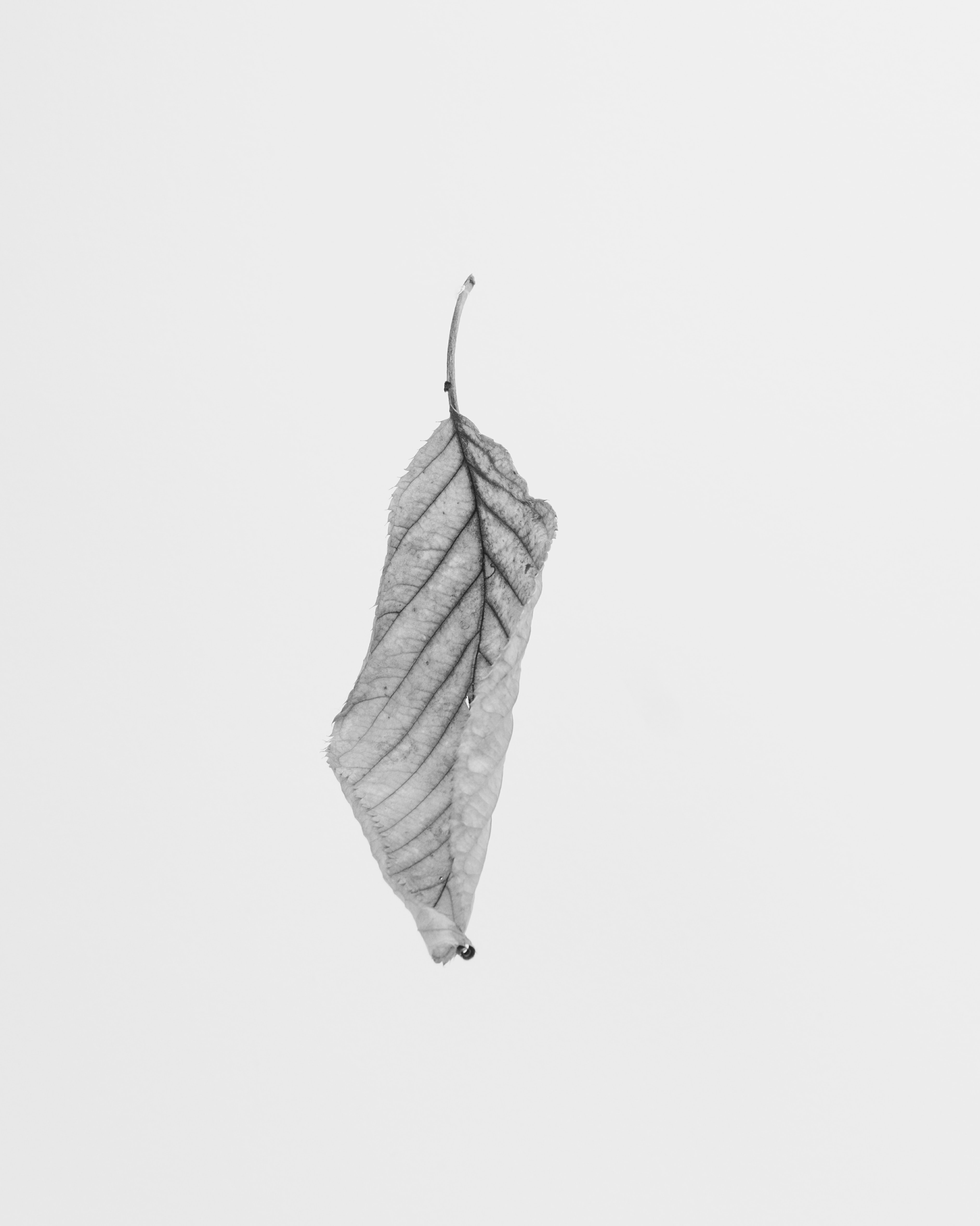 grayscale of leaf