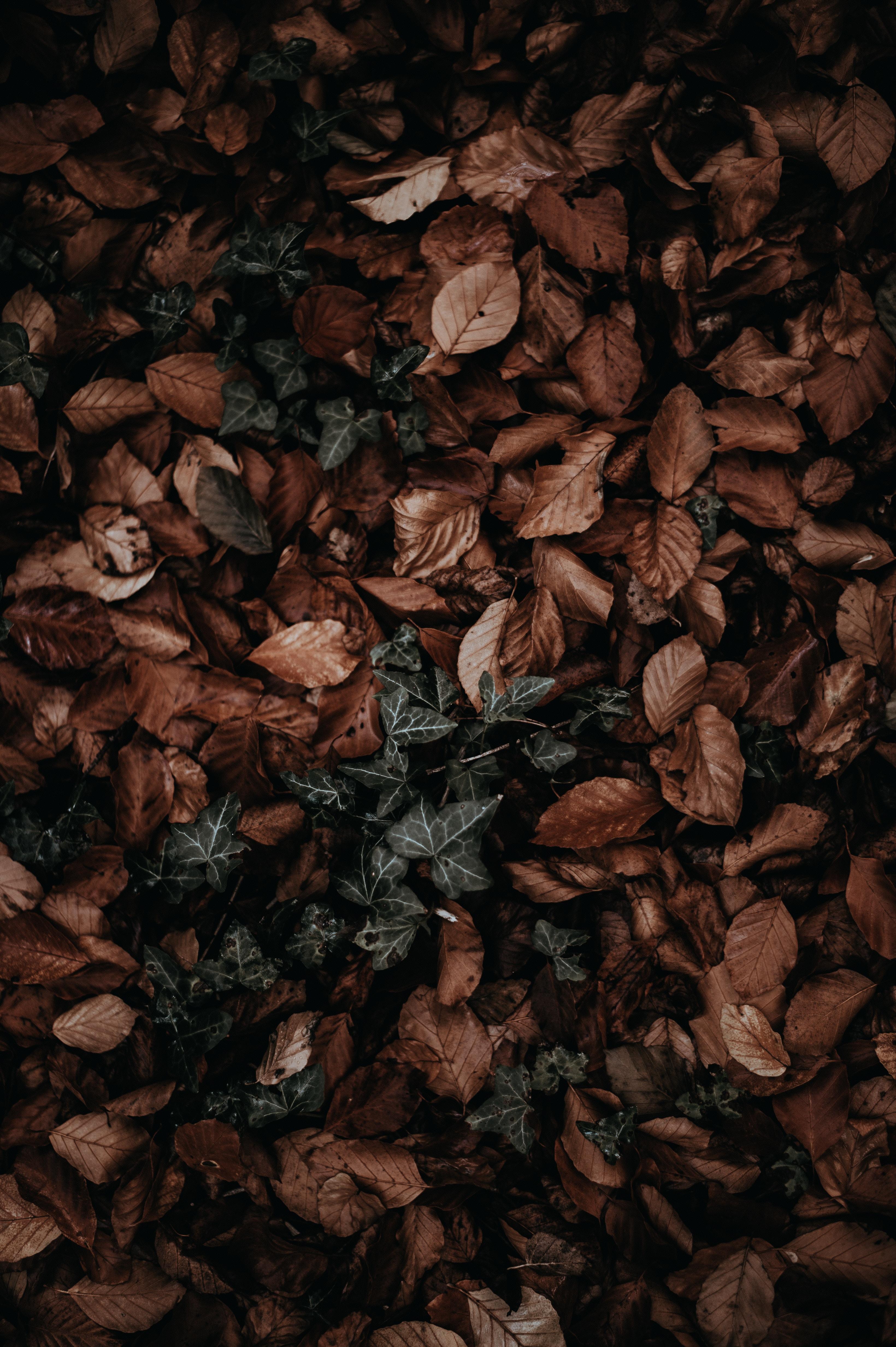 pile of dry leaves
