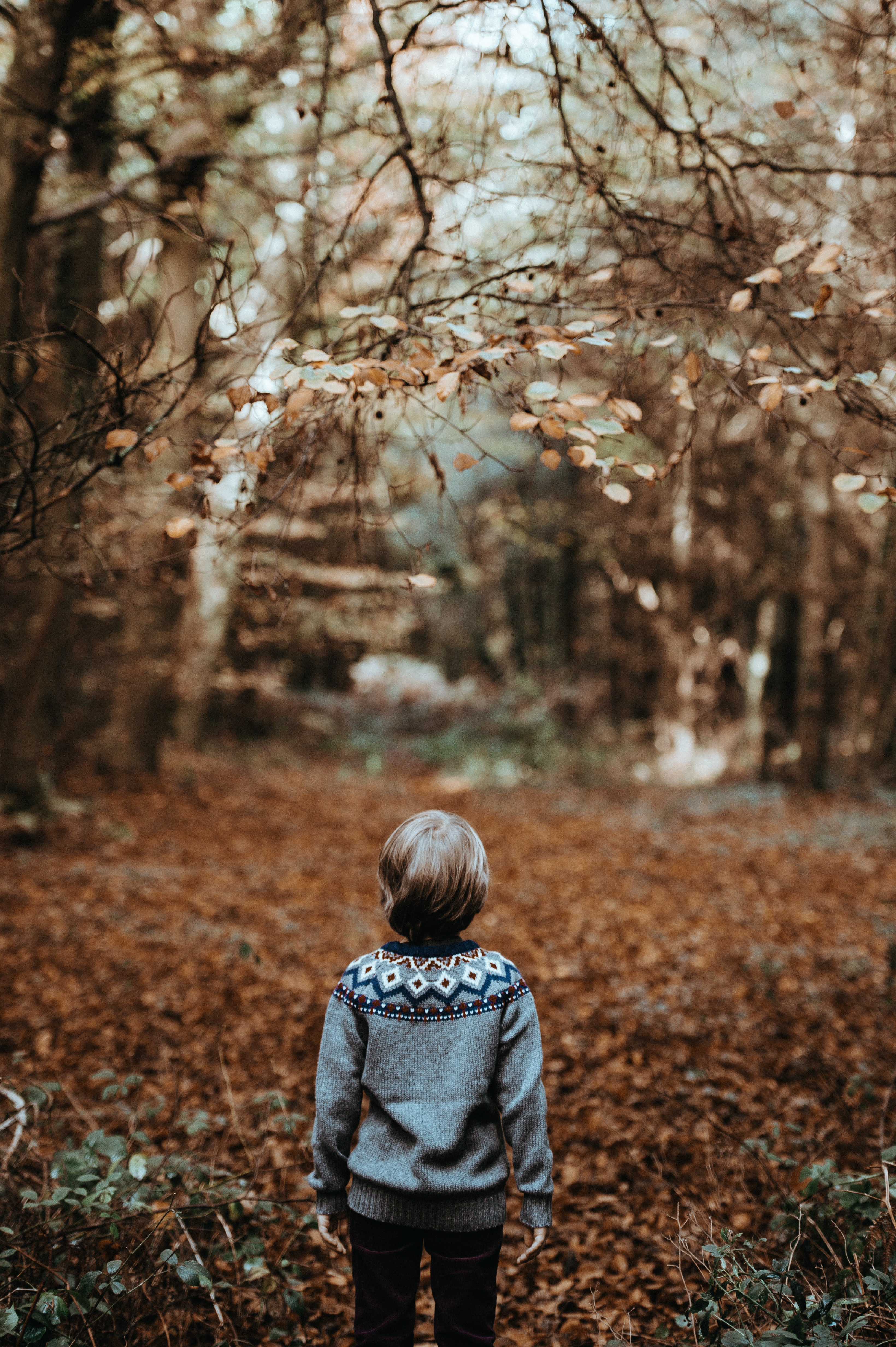toddler underneath trees