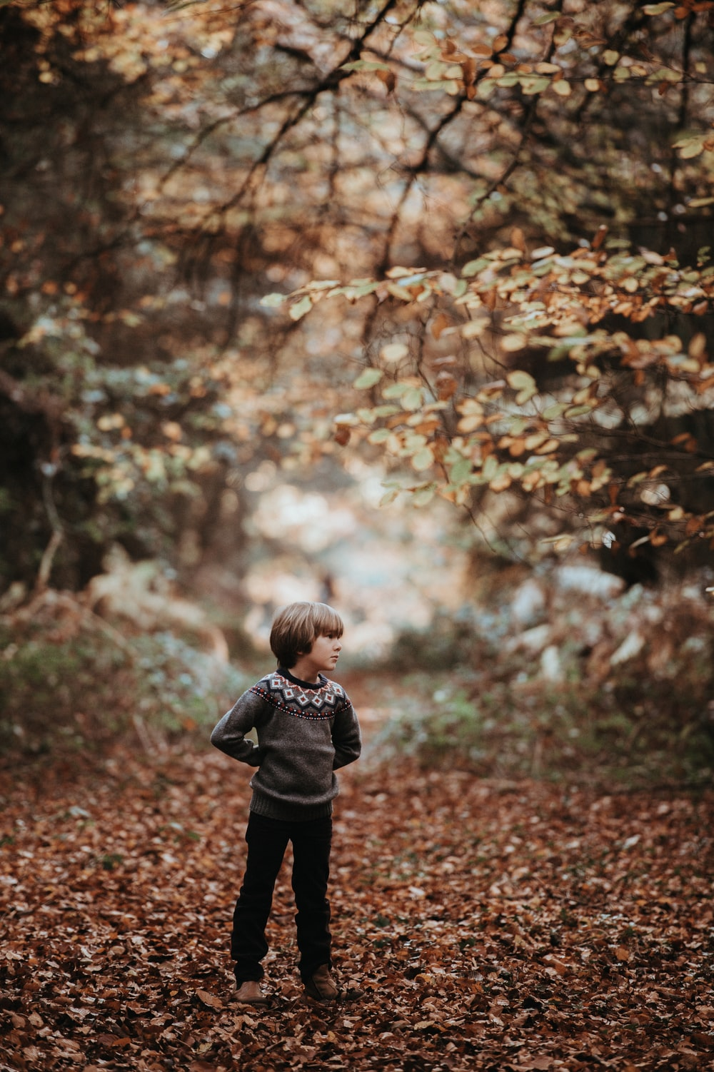boy standing on dried leaves in forest