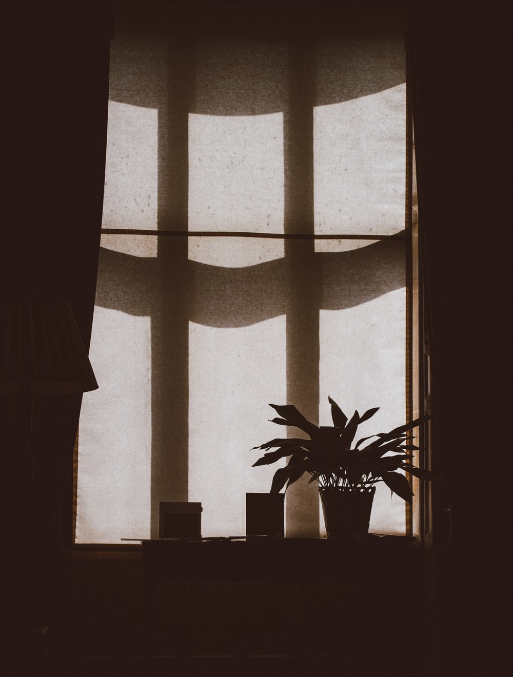 silhouette of plant on the window
