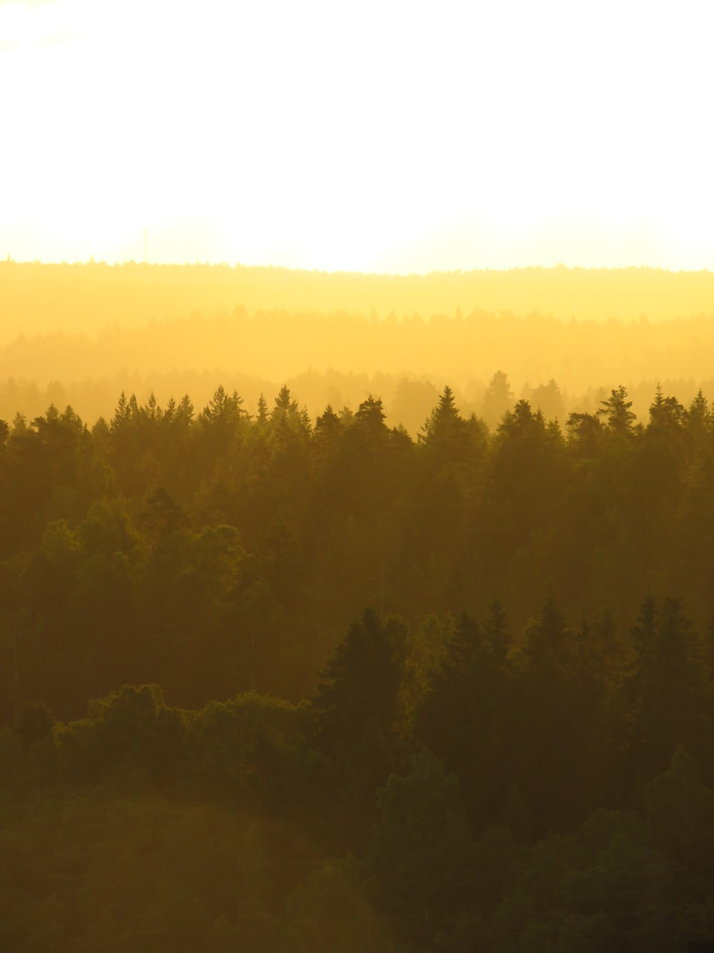 Aerial Photography Of Forest During Day