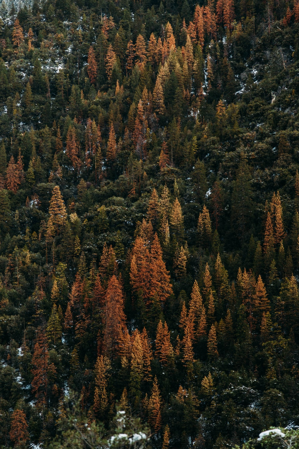 areal view of green pine trees