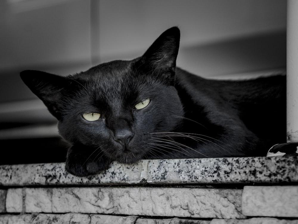 black cat leaning on ceramic tile during daytime