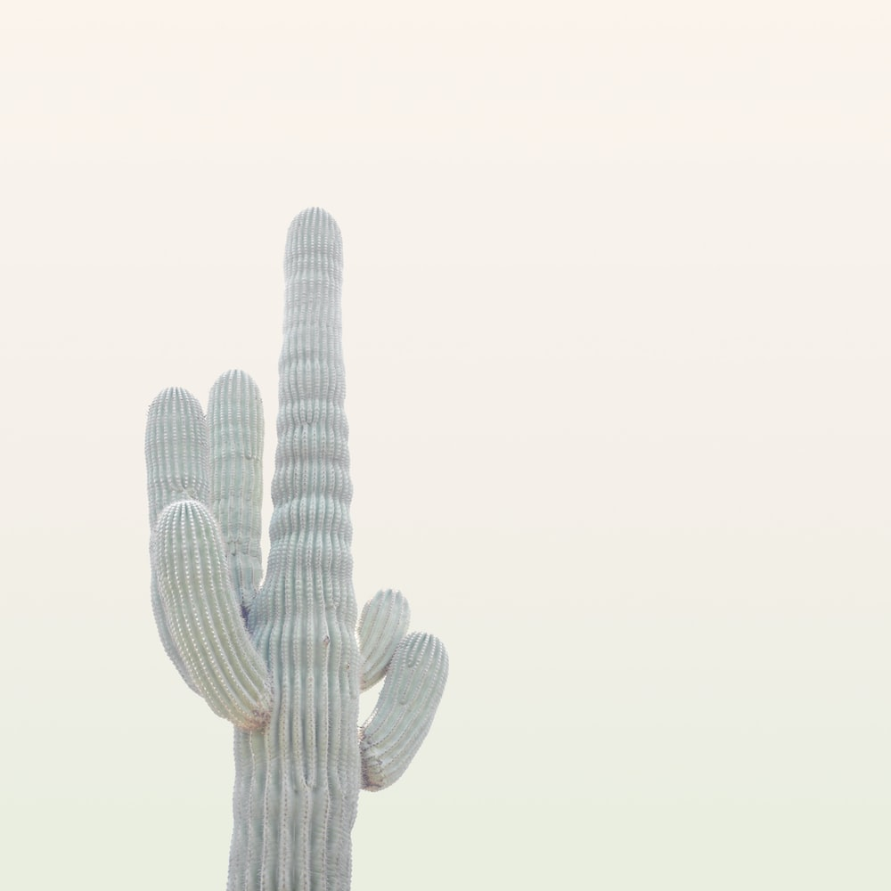 photo of gray cactus plant