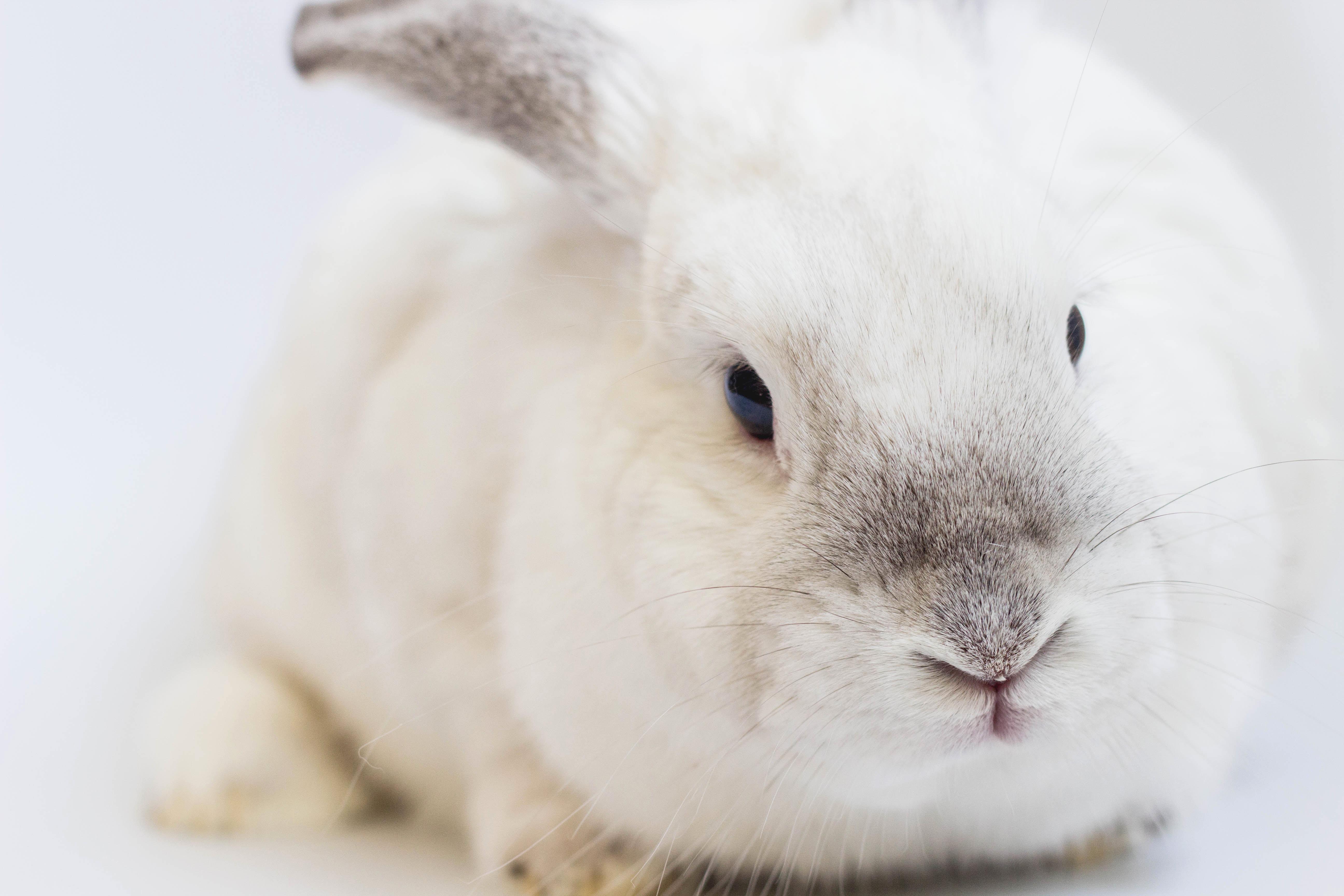 Bunnies  stories