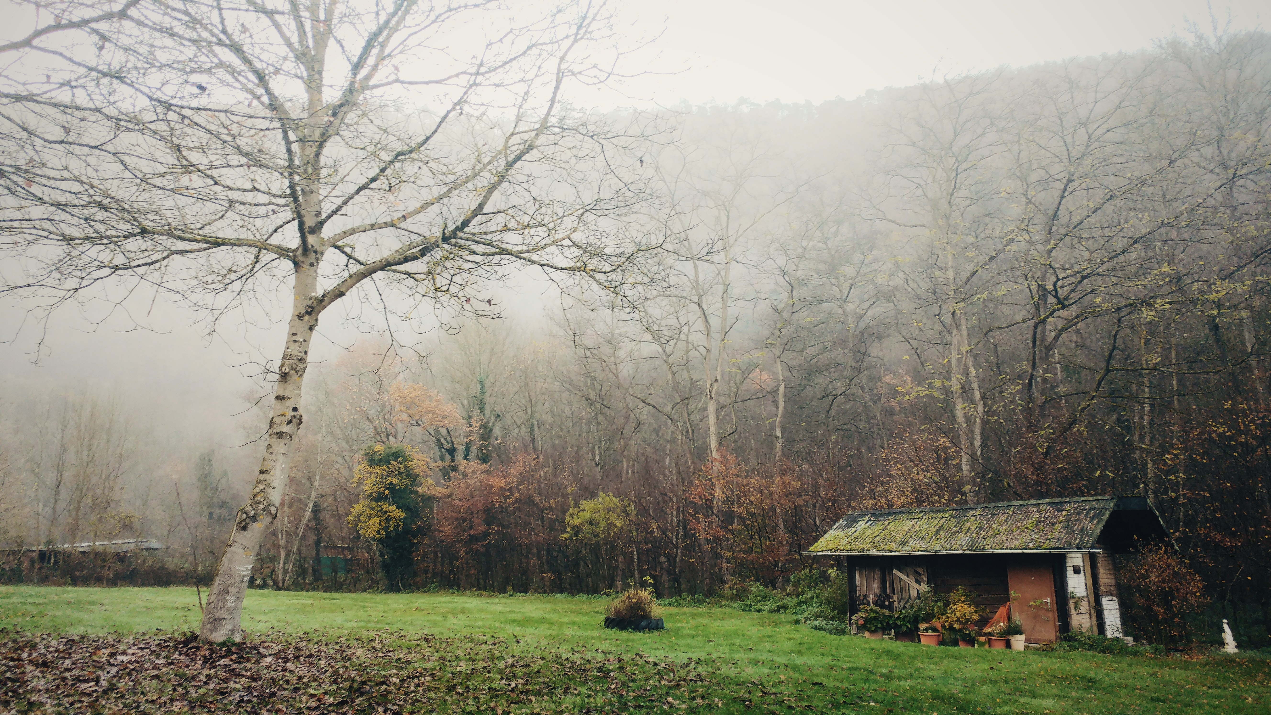 house surrounded by leafless trees and covered by fogs