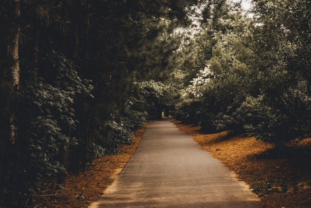 green trees beside a black road