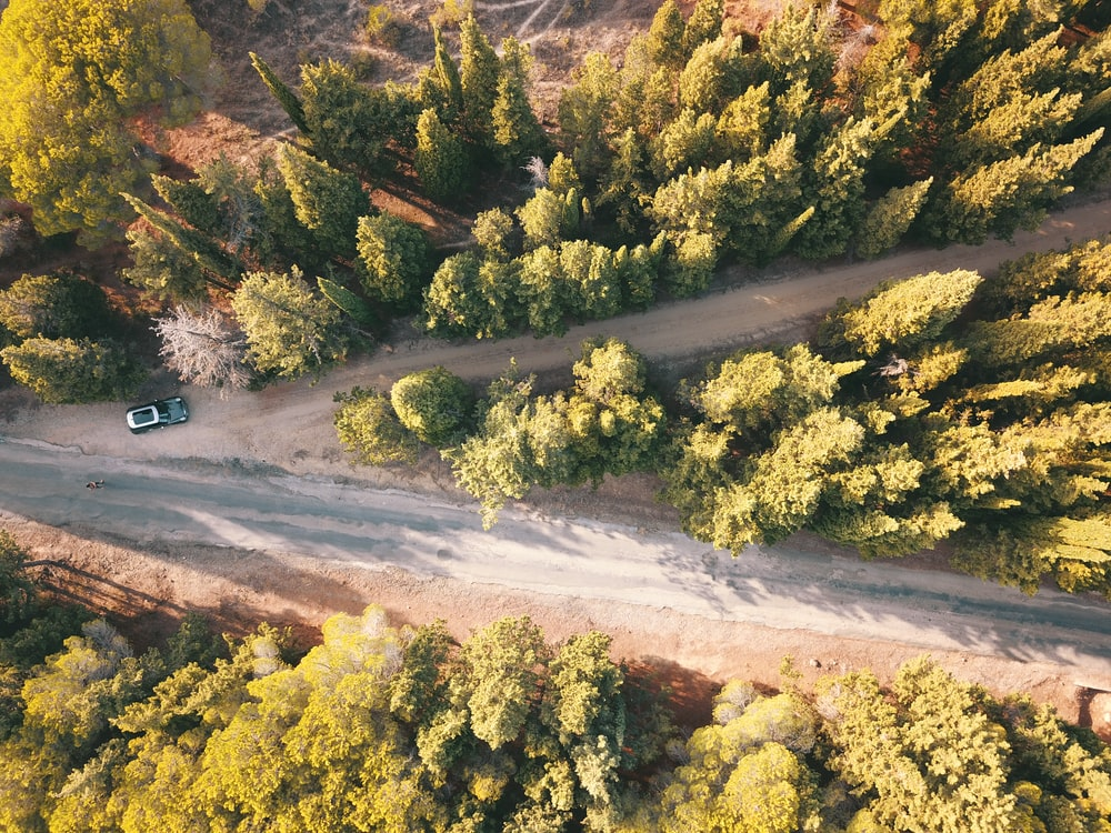 aerial photo of concrete road surrounded by trees