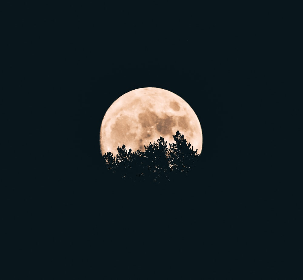 full moon behind a tree silhouettes