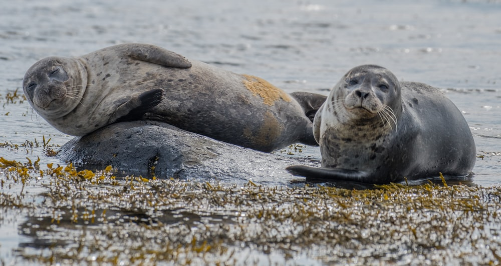 two sea lion near body of water during daytime